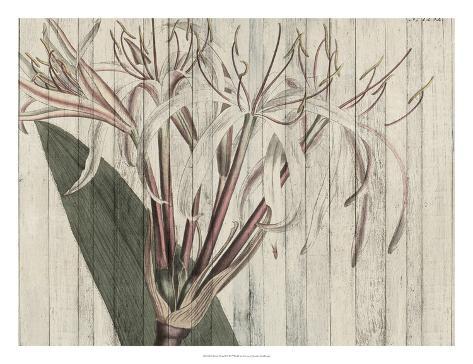 Rustic Floral I Art Print