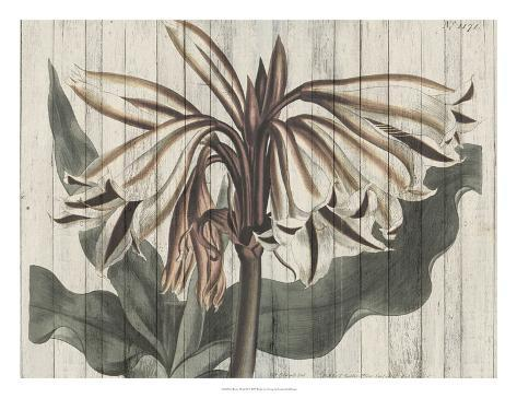 Rustic Floral III Art Print