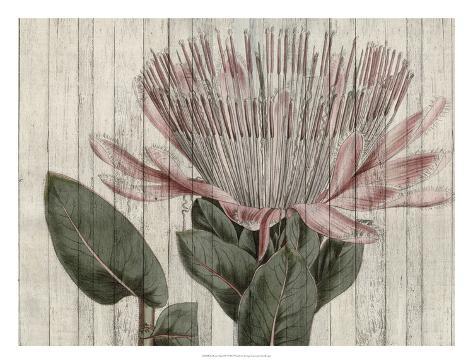 Rustic Floral IV Art Print