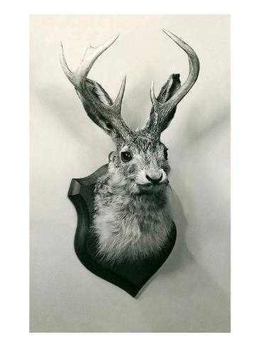 stuffed jackalope prints at allposters com