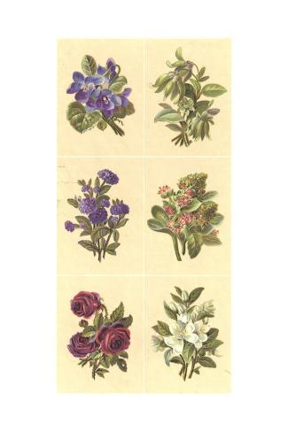 Stylized Floral Bundle Illustrations Art Print