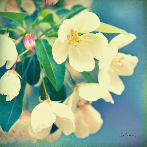 Natures Apple Blossom Art Print