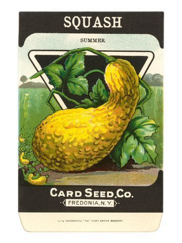 Summer Squash Seed Packet Taidevedos