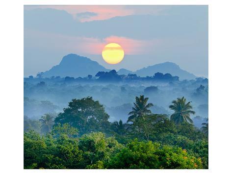 Sunrise Jungles of Sri Lanka Art Print
