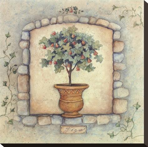 Figs Topiary Stretched Canvas Print