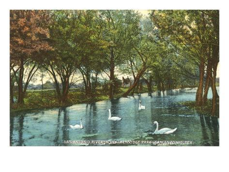 Swans in Brackenridge Park, San Antonio, Texas Art Print