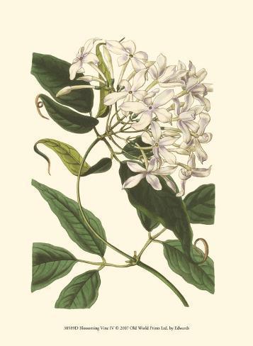 Blossoming Vine IV Art Print