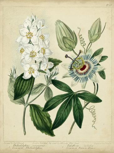 Cottage Florals II Art Print