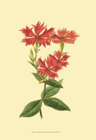 Le Fleur Rouge III Art Print