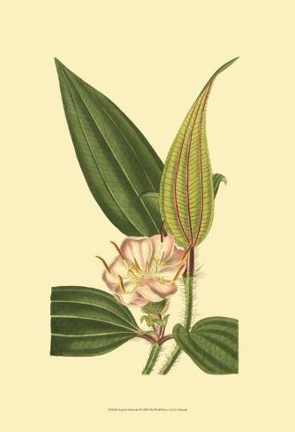Tropical Ambrosia I Art Print