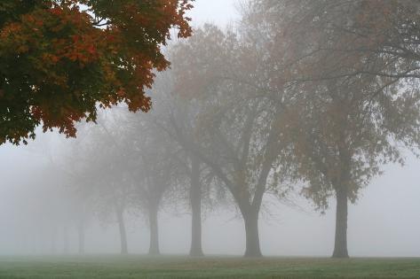 Foggy Trees I Photographic Print
