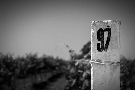 White Column On A Vineyard Background Taidevedos