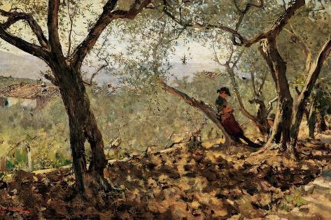 Among the Olive Trees Lámina