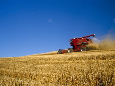 Combines Harvesting Crop, Palouse, Washington, USA Photographic Print
