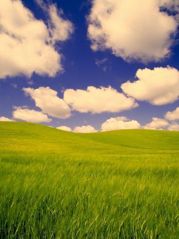Green Barley Field and Clouds, Palouse, Washington, USA Photographic Print