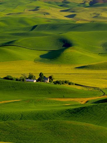 Rolling Green Hills of Spring Crops, Palouse, Washington, USA Photographic Print