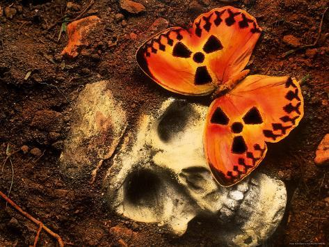 Butterfly on Skull Photographic Print