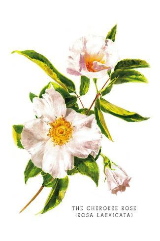 The Cherokee Rose Decalcomania da muro