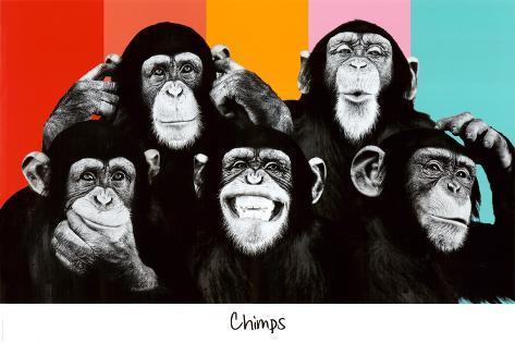 The Chimp Compilation Pop Art Print Poster Poster