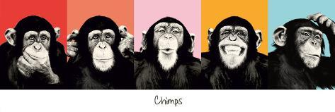 The Chimp - pop Póster para puerta