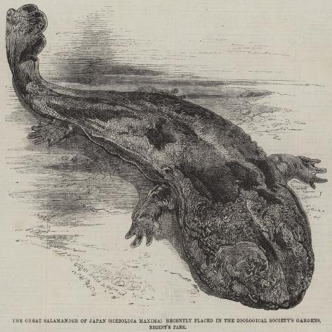 The Great Salamander of Japan (Sieboldia Maxima) Recently Placed in the Zoological Society's Garden Giclee Print