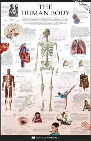 The Human Body Dorling Kindersley Educational Poster Print Poster