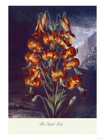 The Superb Lily Art Print