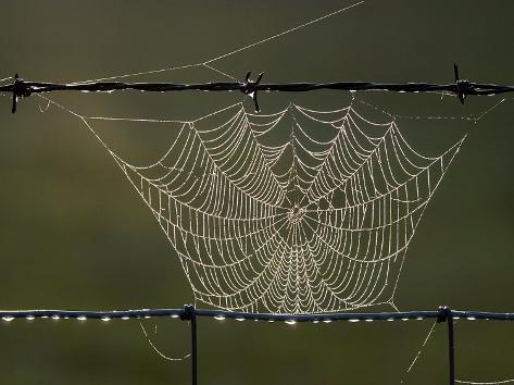 The Work of a Spider is Highlighted by the Morning Sun Photographic Print