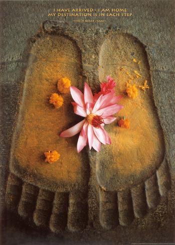 Thich Nath Hanh, Jag har kommit, engelska Konstprint