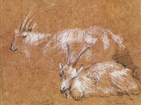 Study of Goats Giclee Print