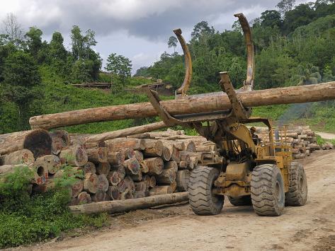 Rainforest Logging Near the Danum Valley Conservation Area, Sabah, Borneo, Malaysia Photographic Print