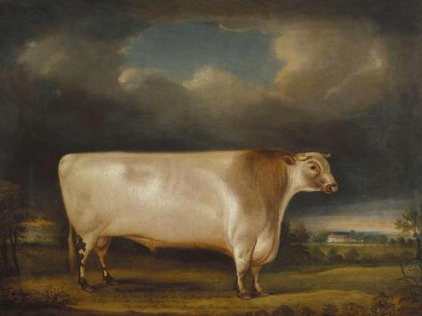 Comet, a Light Roan Short-Horn Bull in a Landscape, 1811 Giclee Print