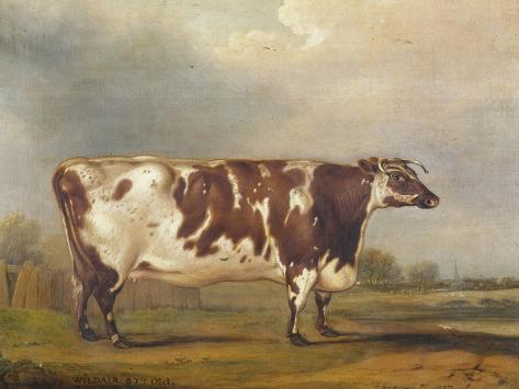 Wildair, an Eight-Year-Old Heifer in a River Landscape, 1827 Giclee Print