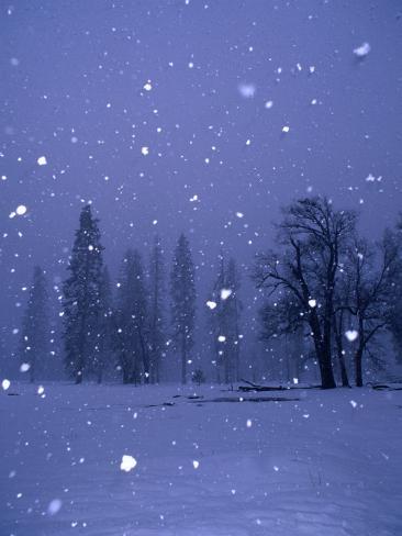 Falling Snow, Yosemite National Park, California, USA Photographic Print