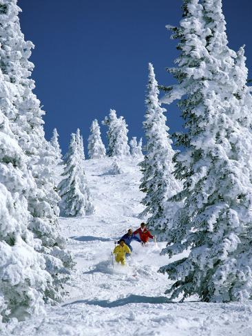 Three Skiers Moving Through Trees Photographic Print