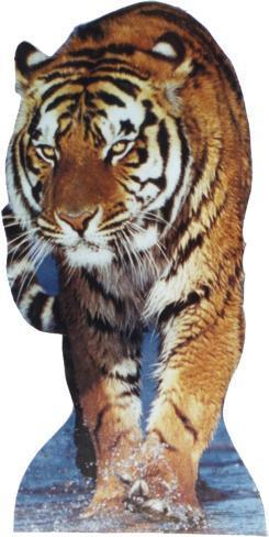 Tiger-TALKING Cardboard Cutouts