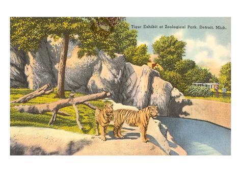 Tigers in Zoo, Detroit, Michigan Art Print