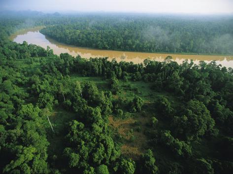An Aerial View of Borneo Asian Elephant Habitat Photographic Print