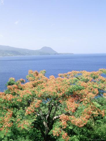 Flowers and Bay, Cabrits National Park, Dominica Photographic Print
