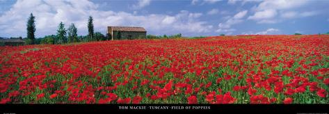 Tuscany, Field of Poppies Art Print