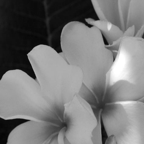 Tropical Bloom III Giclee Print