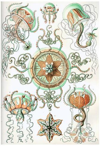 Trachomedusae Nature Art Print Poster by Ernst Haeckel Poster