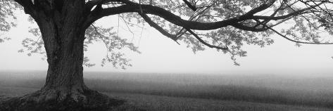 Tree in a Farm, Knox Farm State Park, East Aurora, New York State, USA Photographic Print