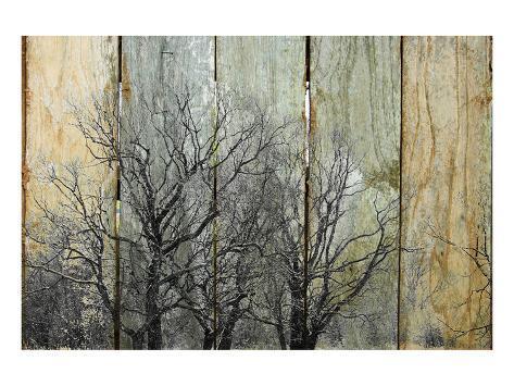 Trees at Sunrise II Art Print