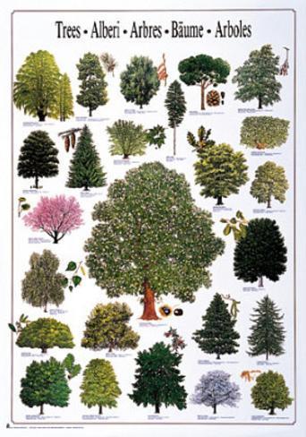 Trees Varieties Poster