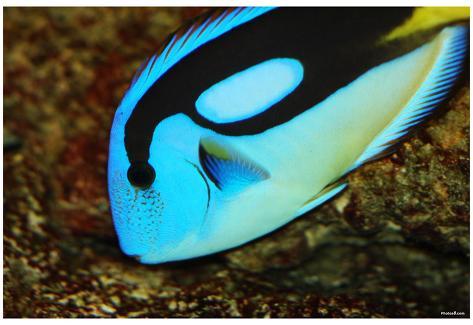 Tropical Fish Close Up Art Poster Print