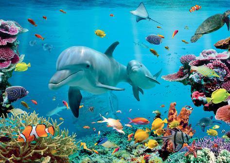 Tropical Underwater Ocean Prints At Allposters Com Au