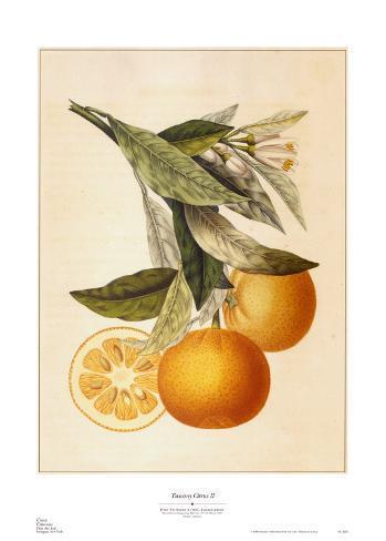 Tuscany Citrus II Art Print