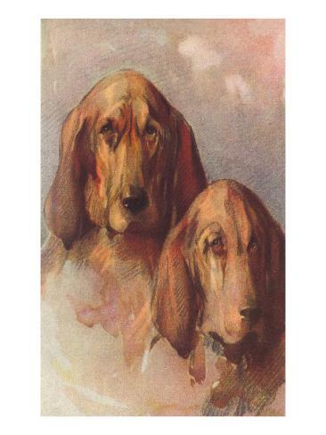 Two Bloodhounds Art Print