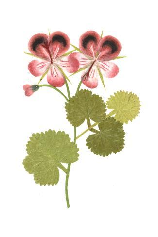 Two Flowering Stems Art Print